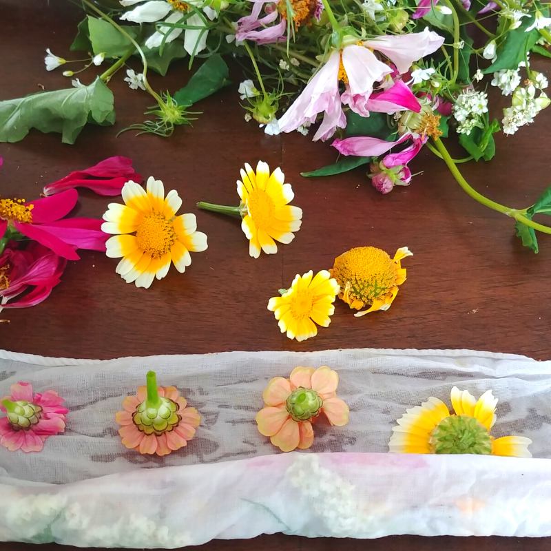 A display of dye flowers and plants.